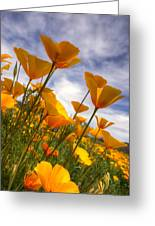 Paint The Desert With Poppies Greeting Card by Saija  Lehtonen