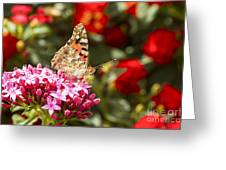 Painted Lady Butterfly Greeting Card by Eyal Bartov