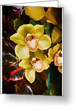 Painted Orchids Greeting Card by John Haldane