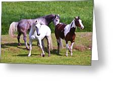 Painted Pretty Horses Greeting Card by Athena Mckinzie