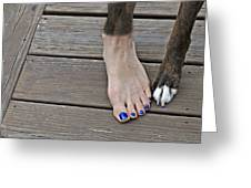 Painted Toenails And Dog Claws Greeting Card by Harold Bonacquist