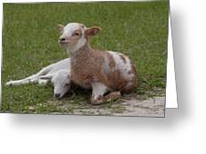 Pair Of Lambs Greeting Card by Richard Baker