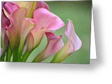Pale Pink Blush Greeting Card by Fraida Gutovich