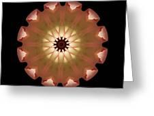 Pale Pink Tulip Flower Mandala Greeting Card by David J Bookbinder