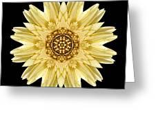 Pale Yellow Gerbera Daisy I Flower Mandala Greeting Card by David J Bookbinder