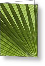 Palm Abstract Greeting Card by Patty Colabuono