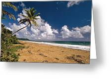 Palm Tree On Maunabo Beach Puerto Rico Greeting Card by George Oze