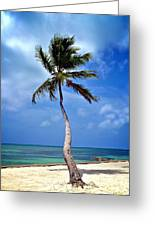 Palm Tree Swayed Greeting Card by Kristina Deane