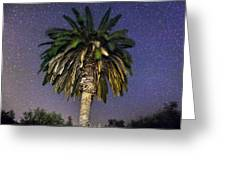 Palmtree In Alentejo Greeting Card by Andre Goncalves