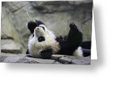 Panda Cub Greeting Card by Jack Nevitt