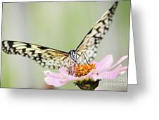 Paper Kite Butterfly On Zinnia Greeting Card by Oscar Gutierrez