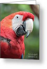 Parrot Profile Greeting Card by Carol Groenen