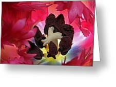 Parrot Tulip Swirl  Greeting Card by Juergen Roth