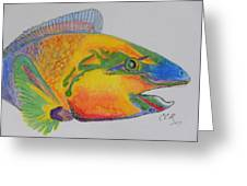 Parrotfish Greeting Card by Connie Campbell Rosenthal