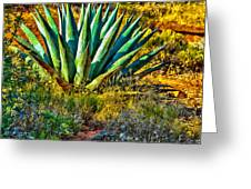 Parry's Agave Sometimes Called Century Plant Greeting Card by Bob and Nadine Johnston