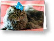 Party Cat Greeting Card by Robert Culver