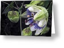 Passiflora Greeting Card by Richard Cummings