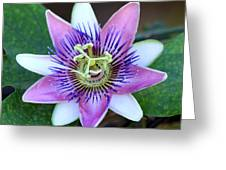 Passion Flower Greeting Card by Art Block Collections
