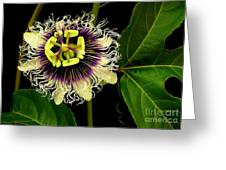 Passion Flower Greeting Card by James Temple