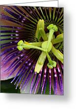 Passion Flower Up Close Greeting Card by Bruce Bley