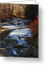 Passion For The Stream Greeting Card by Pamela Phelps
