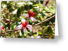 Passionfruit Guava Blossom Greeting Card by Nancy Heimstra