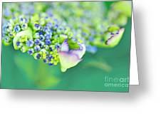 Pastel Buds Greeting Card by Kaye Menner