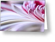 Pastel Gerbera Greeting Card by Adam Romanowicz