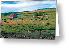 Pasture Greeting Card by Terry Reynoldson