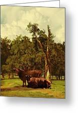 Pastureland Greeting Card by Schwartz