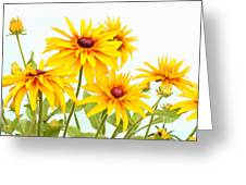 Patch Of Black-eyed Susan Greeting Card by Steve Augustin