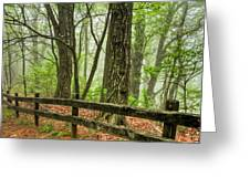Path into the Forest Greeting Card by Debra and Dave Vanderlaan