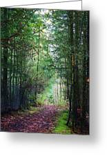 Path Of Adventure Greeting Card by Bruce Bley