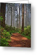 Path Thru The Redwoods Greeting Card by Michael  Ayers
