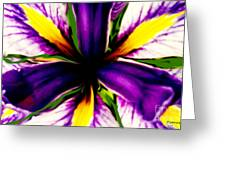 Patricia Bunk's Iris  Greeting Card by Patricia Bunk