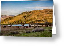 Patterson Mountain Afternoon View Greeting Card by Omaste Witkowski