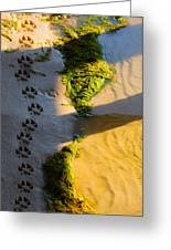 Pawprints In The Sand Greeting Card by Parker Cunningham