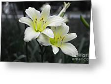Peaceful Daylilies Greeting Card by Dawn Beck