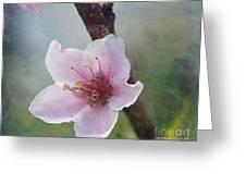 Peach Blossom 2 Greeting Card by Cindi Ressler