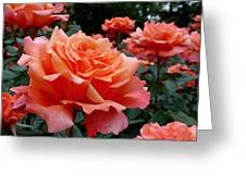 Peach Roses Greeting Card by Rona Black