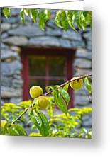 Peach Tree At The Old Mill Of Guilford Greeting Card by Sandi OReilly