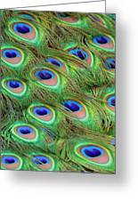 Peacock Feather Cascade Greeting Card by Angelina Vick
