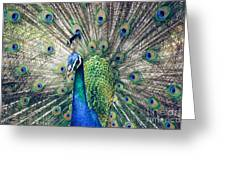 Peacock Indian Blue Greeting Card by Sharon Mau