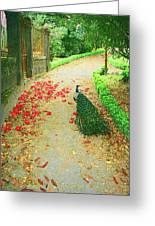 Peacock Path A Greeting Card by Dulce Levitz
