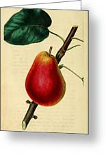 Pear 1829 Greeting Card by Philip Ralley