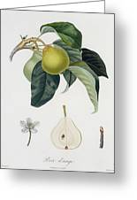 Pear Greeting Card by Pierre Antoine Poiteau
