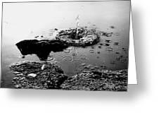 Pebble Splash Greeting Card by David Stewart