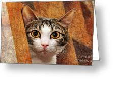 Peek A Boo I See You Greeting Card by Andee Design