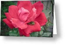 Peek-a-boo Greeting Card by Richard Burr