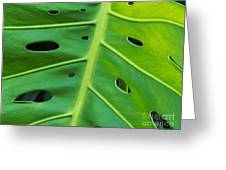 Peekaboo Leaf Greeting Card by Ann Horn